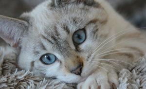 Medzinárodný deň mačiek
